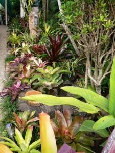 garden 019